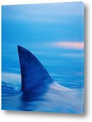 Постер Shark002