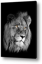 Львиные глаза