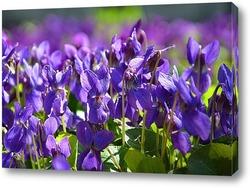 Постер Сиреневая весна
