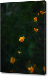 Картина Лютики цветочки