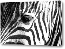 Постер Полосатая зебра