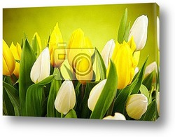 Постер Photo of tulips