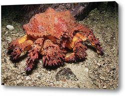 crab008