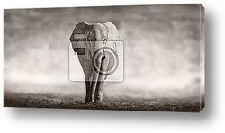 слон на черном фоне
