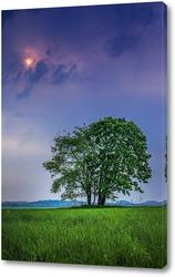 Постер Несколько деревьев одиноко стоящих в поле на фоне пасмурного неба и солнца пробивающегося сквозь тучи
