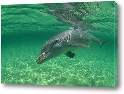 dolphin062