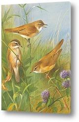 Постер Камышевки на болоте