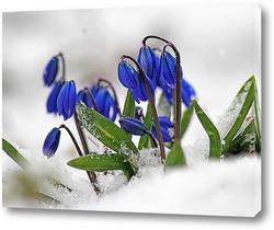 Постер В мире наступающей весны...