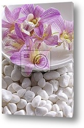 Bowl of element frangipani on pebble