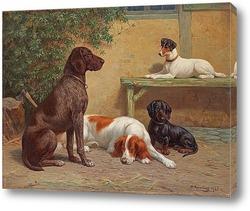 Группа собак на лестнице