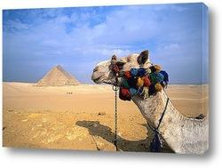 Egypt031