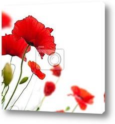 bandeau horizontal vert et fleur rouge - nature et coquelicot