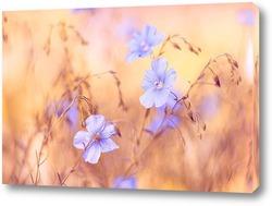 Постер луговые голубые цветы