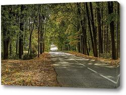 Постер Деревья у дороги