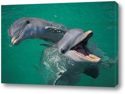 Постер Dolphin045