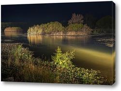 Постер Заросшие густой растительностью островки на ночном озере освещённом светом фар