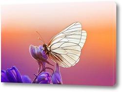 Постер Красивая белая бабочка сидит на синем цветке в солнечный летний день