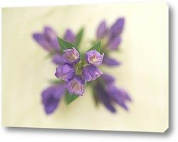 Flower604