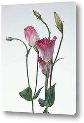 Flower159