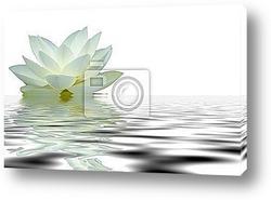 Постер Reflet fleur de lotus