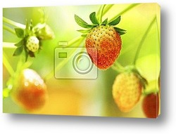 Натуральные ягоды на столе