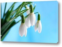 Подснежник – первый цветок весны