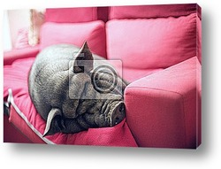 Постер Black piggy on sofa