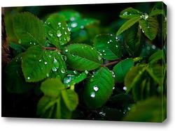 Постер Листья клубники после дождя