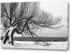 Постер Дерево в поле