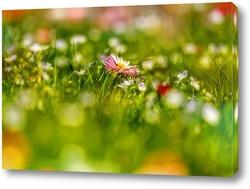 Постер Луговые цветы в весеннее время