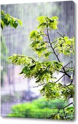 Осеннее дерево над зеленой травой