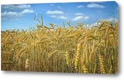 Постер Спелые зерна