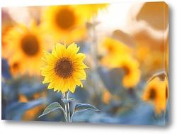 nature et Г©nergie - fleurs de tournesols sur fond vert