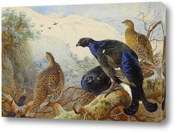 Птенцы французской куропатки