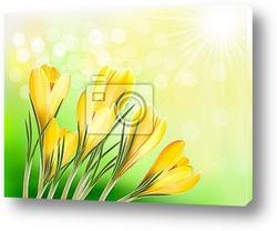 Постер Spring background with yellow crocus