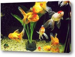 Картина Fish010