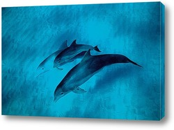 dolphin090