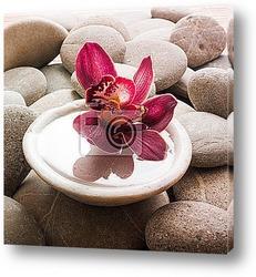 Постер Орхидея на камнях