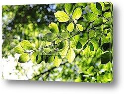 Постер Green leaves with sun ray
