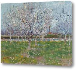 Оливковая роща - бледно голубое небо