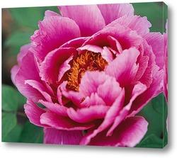 Flower644