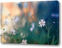Постер нежный белый цветок на весеннем лугу