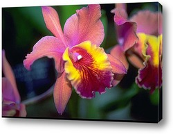 beautuiful orchid