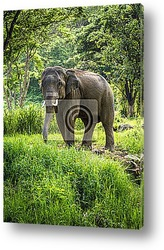 Mature bull elephant with long tusks stands in forest