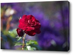 Картина роза в лаванде