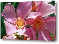 Flower093