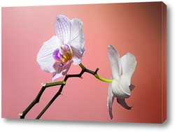 Bouddha et orchid