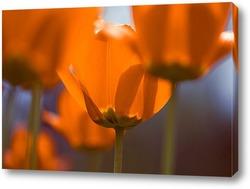 Постер Тюльпаны наполненные светом