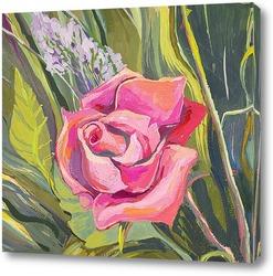 Картина Нежная роза