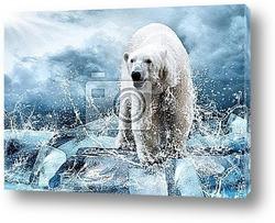 Постер Белый полярный медведь охотится на льду в каплях воды.